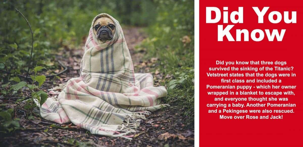 Best-Dog-Boots-For-Dew-Claws-fact