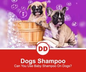Can-You-Use-Baby-Shampoo-On-Dogs