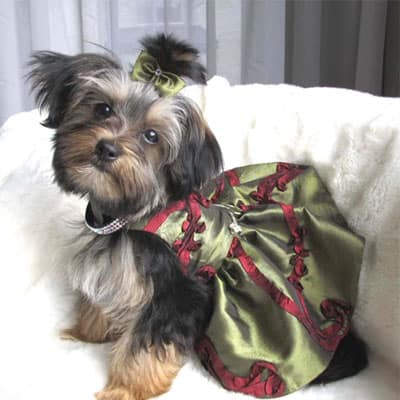 Hand Tailored Fashion And Accessories For Haute Pups