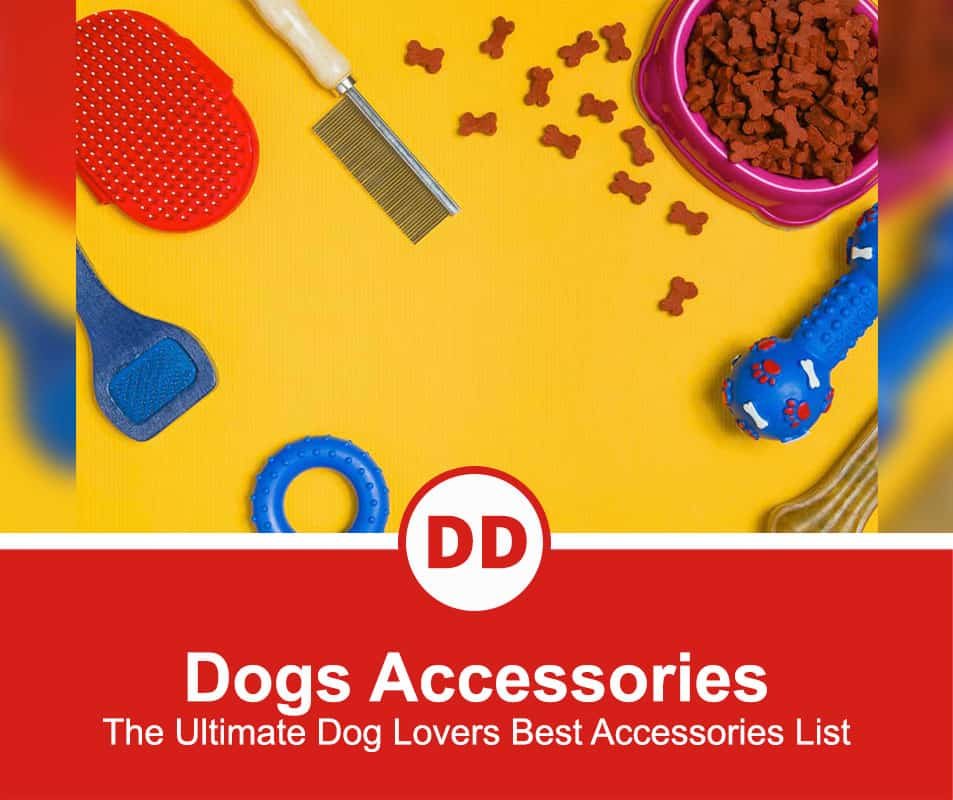 The-Ultimate-Dog-Lovers-Best-Accessories-List
