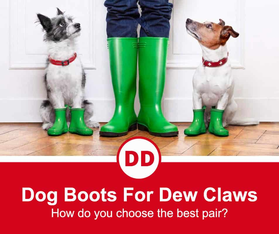 image of dog with dew claws in green boots
