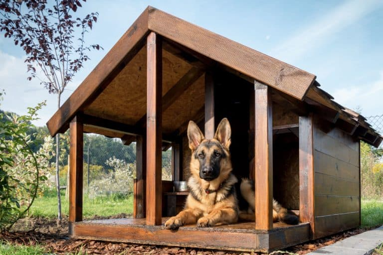 dog house is made