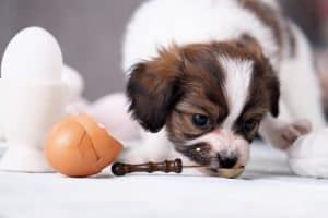 dog with egg shells