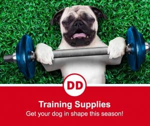image of dog lifting dumbell weight