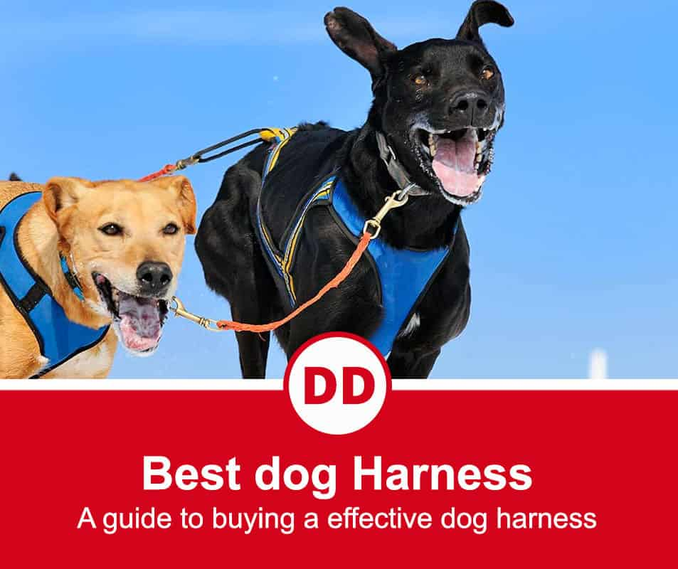 image of dogs in harness