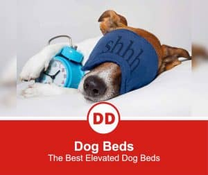 The-Best-Elevated-Dog-Beds