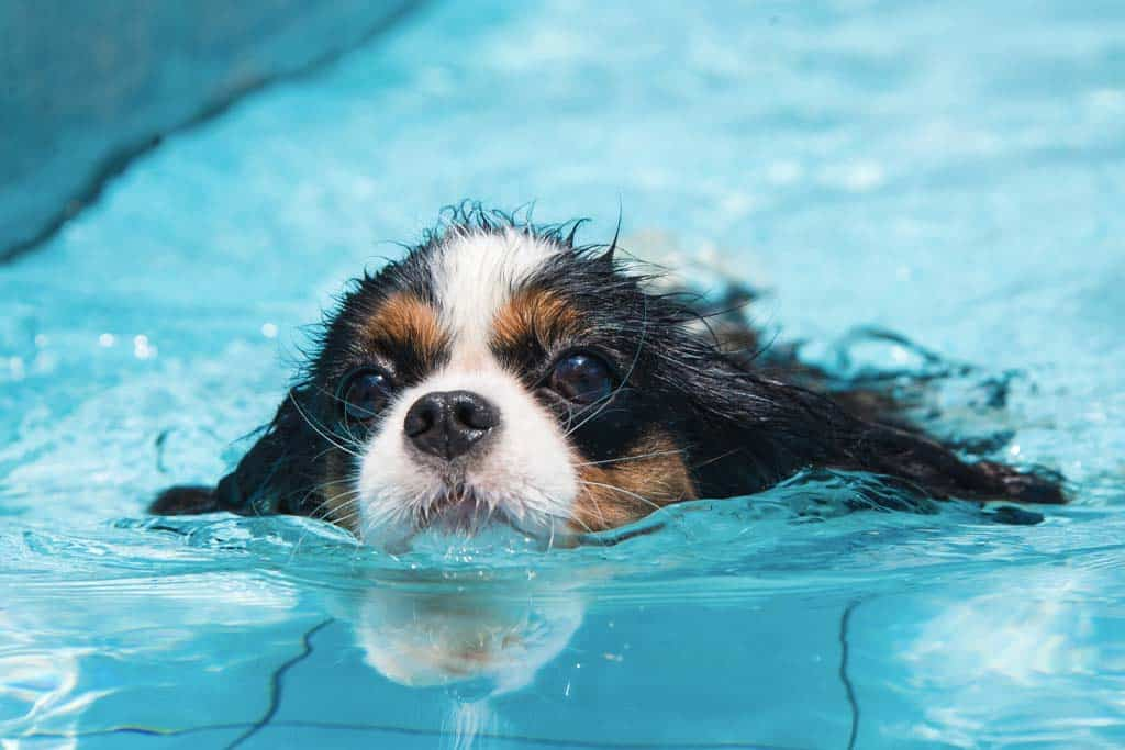 The 9 Best swimming pool for dogs (2021 Reviews)