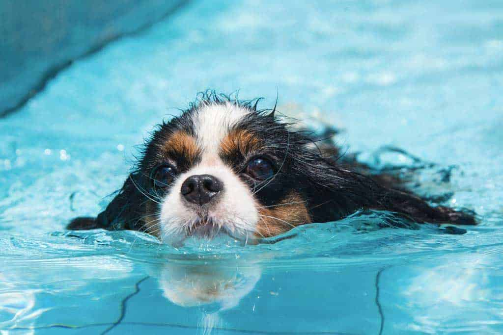 Top 9 Best swimming pools for dogs (2021 Reviews)