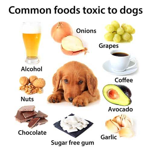 toxic foods to dogs