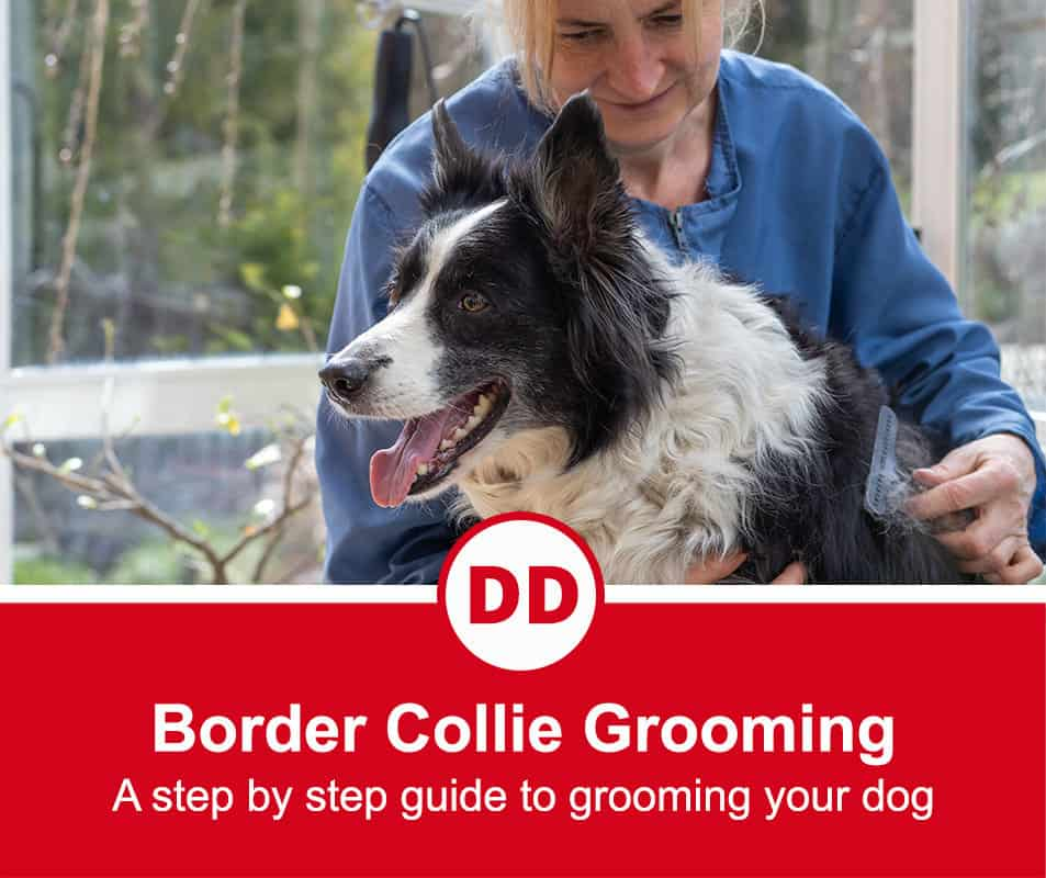 border collie being groomed by a professional groomer