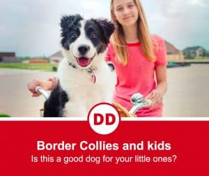 image of border collie with girl on a bike