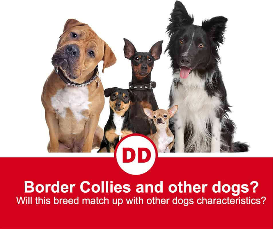 Border collie and other breeds in an image all sitting down staring at the camera. A total of 5 dog in this image.