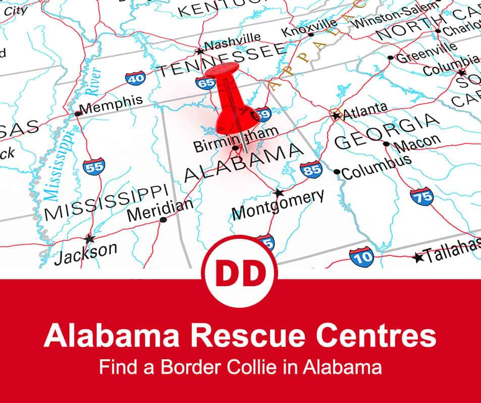 Alabama border collie rescue centers feature image for a post with Alabama map location