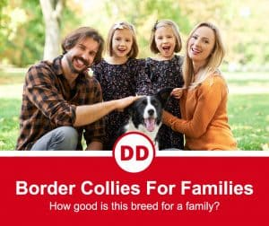 DO Border collies make good family dogs image of family with a dog